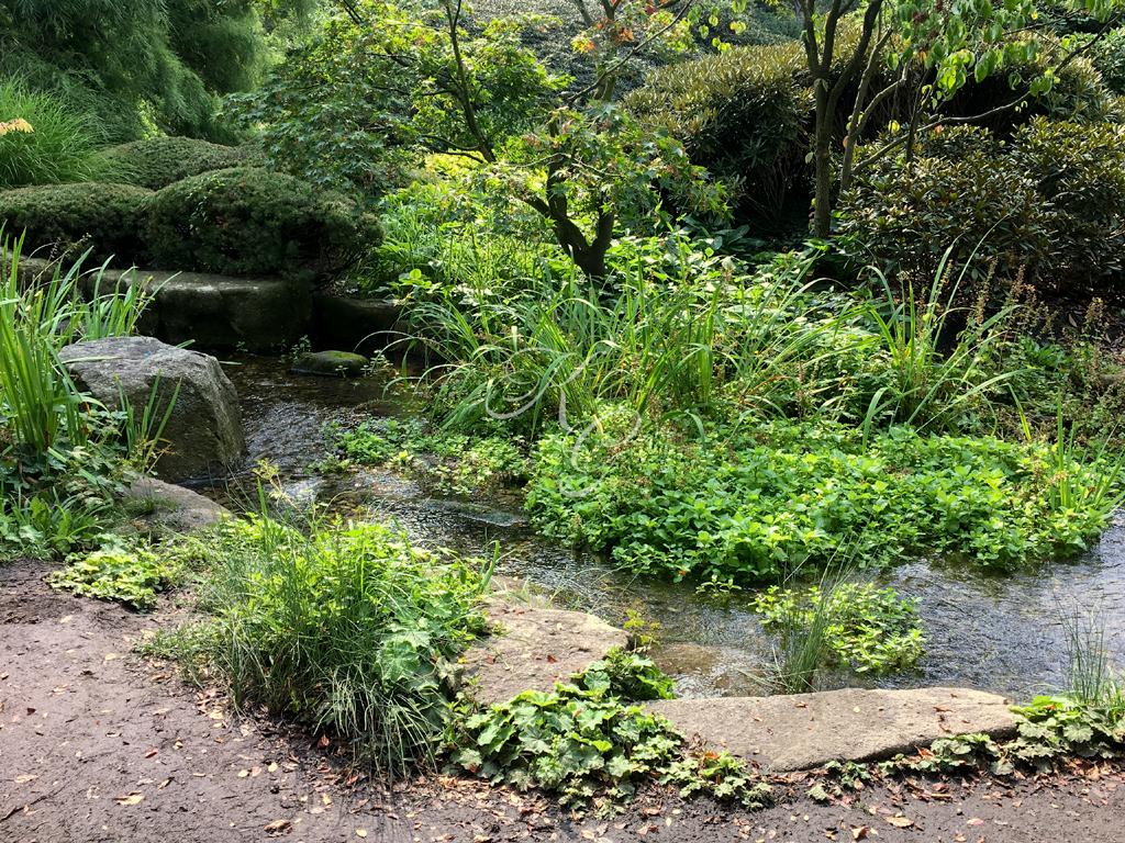 Natürlicher Wasserlauf